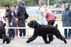 Dog Show-4.jpg