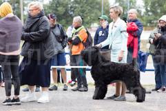 Dog Show-3.jpg