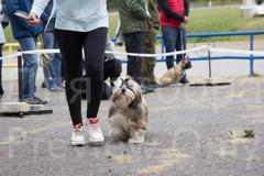 Dog Show-30.jpg