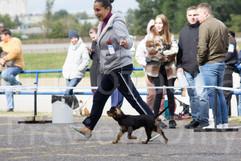 Dog Show-8.jpg