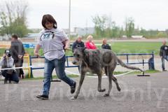 Dog Show-502.jpg