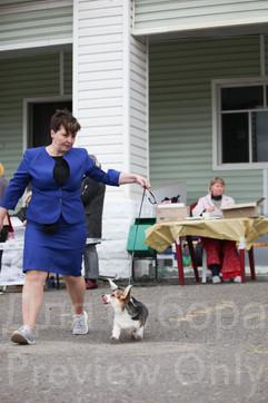 Dog Show-44.jpg