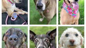 Check Out Our Hidden Gems in Honor of Adopt a Less-Adoptable Pet Week!