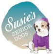 Susie Senior Dogs