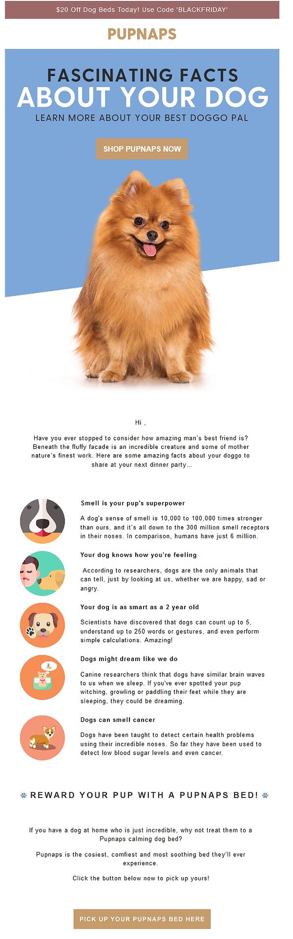 Dog bed email copywriting.png