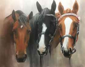 My Three Horses