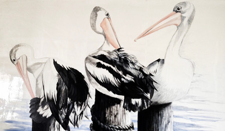 Pelican Bath Time