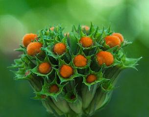 Macro photography, Flower photography, Bokeh, Nature