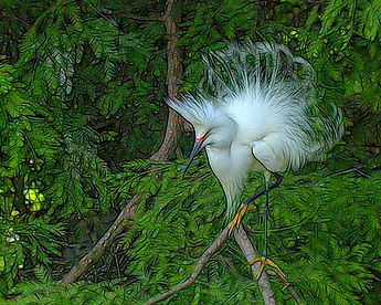 Snowy Egret, bird photography, Nature Photography