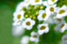 aphy, Flowers, Flower photgraphy, Nature, Gardening