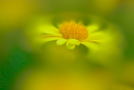 Bokeh, Macro photography, Flower photography, Nature images