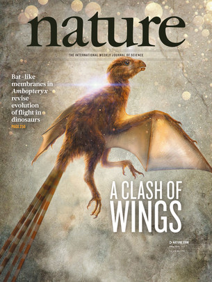 Ambopteryx - Wang et al. 2019