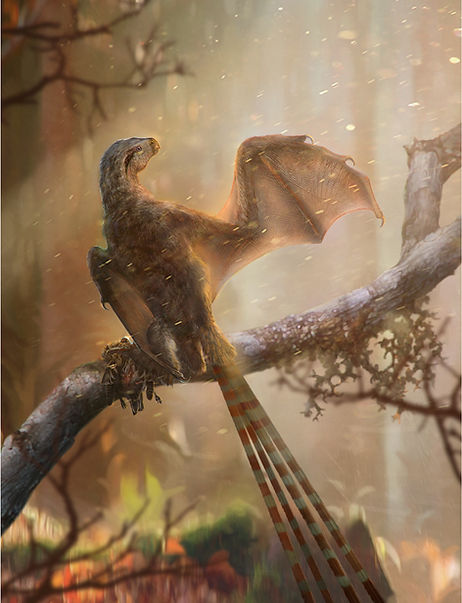 Reconstruction of Ambopteryx longibrachium, from Wang Min et al., 2019; Artist: Chung-Tat Cheung