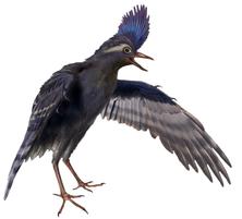 Archaeornithura