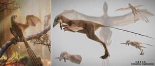 Ambopteryx longibrachium - Wang et al 2019