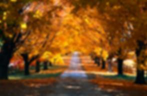 Autumn Path.png