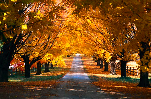 Autumn Path.png
