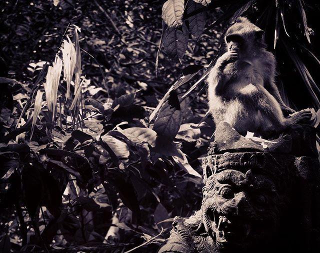 #monkey #bali