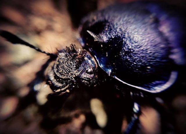 Another evil bug #evilbug