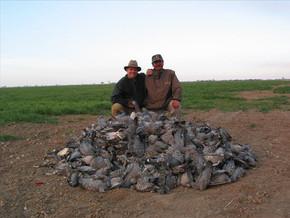 JHA pigeon pile a.jpg