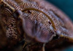 Noel Dawson: Bug