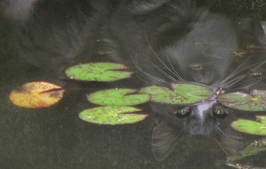 Keith Hammett Pond dweller