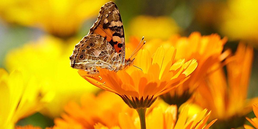 Transformer les plantes et fleurs  pour les soins et cosmétiques