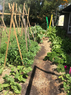garden path with stakes.jpg