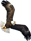 transparent eagle.png