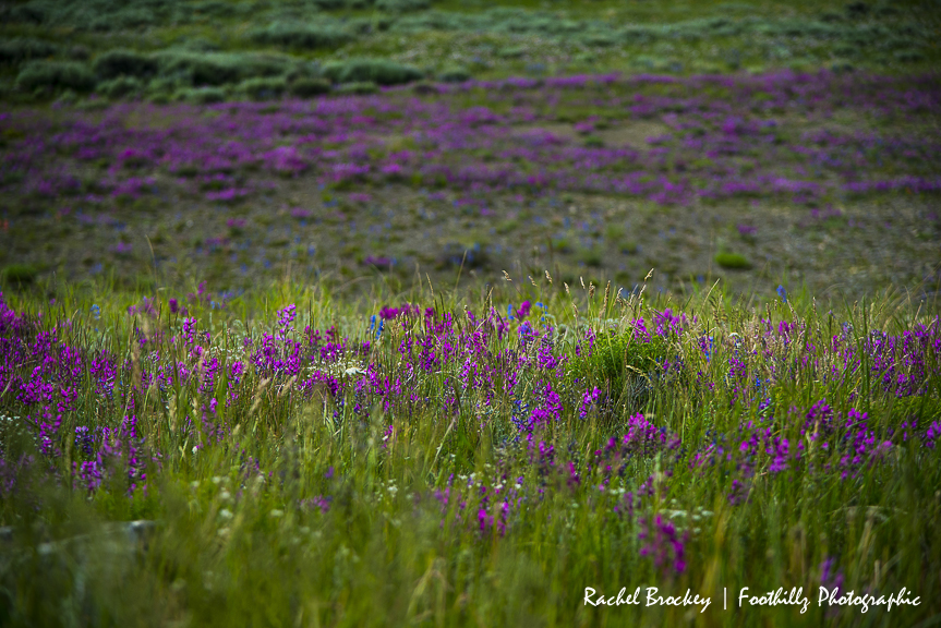 Wildflowers Flattops 3.jpg