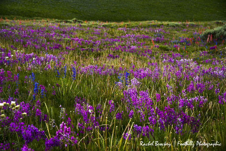 Wildflowers Flattops 5.jpg