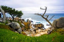 Lone Cypress 12 sm.jpg