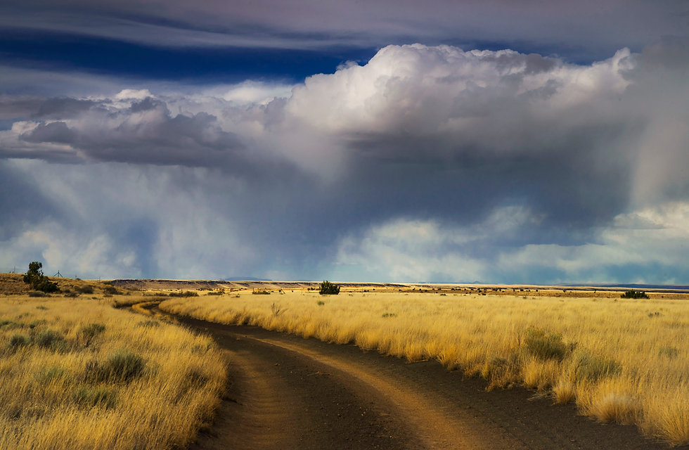 ©Rachel Brockey ASFP Arizona RoadSM.jpg