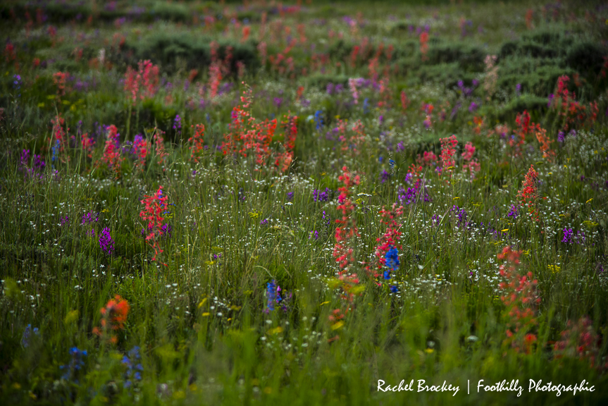Wildflowers Flattops 1.jpg