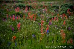 Wildflowers Flattops 1.jpg