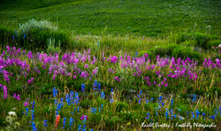 Wildflowers Flattops Two.jpg