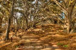 Los Lobos Walk.jpg