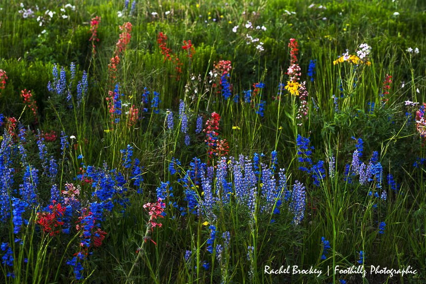 Wildflower Flattops 4.jpg