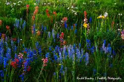 Wildflower Flattops 4.jpg
