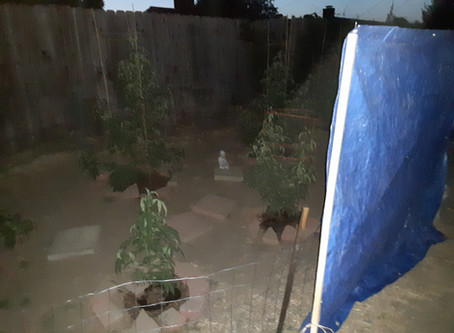 We must have total darkness at night for our outdoor weed garden.