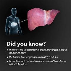 liver disease faq