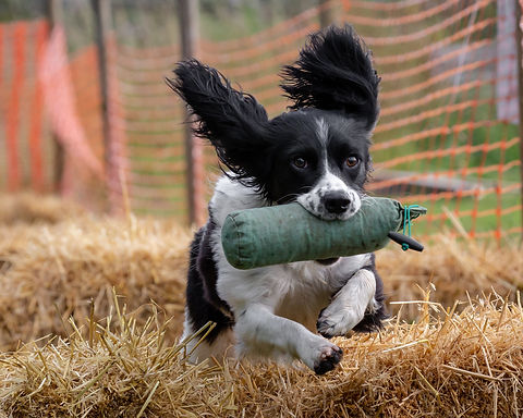 Dog with a dummy, photo by Lee White
