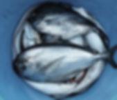 peces Pail