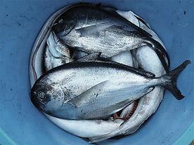 Fish Pail