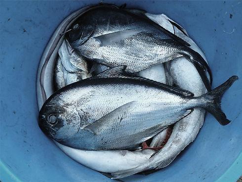 peixes balde