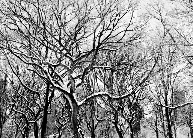 Central Park, NY 2013