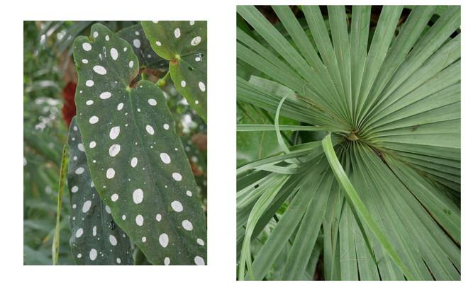 Vert-Plante_Dyptique_13.jpg
