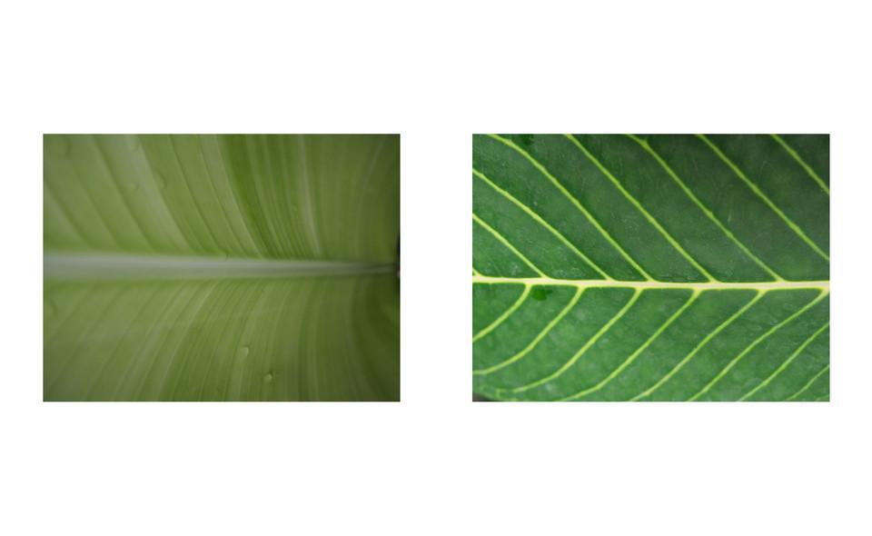 Vert-Plante_Dyptique_3.jpg