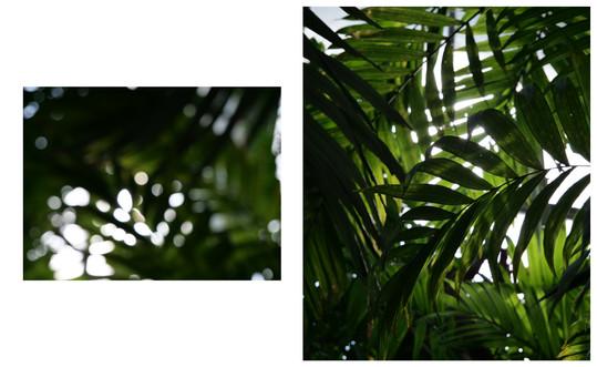 Vert-Plante_Dyptique_7.jpg