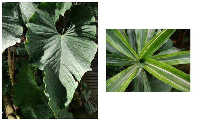 Vert-Plante_Dyptique_11.jpg